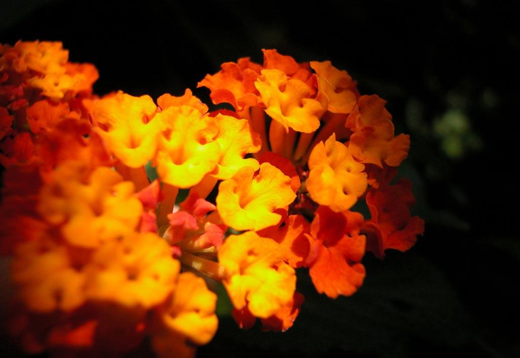 treball personal, flor