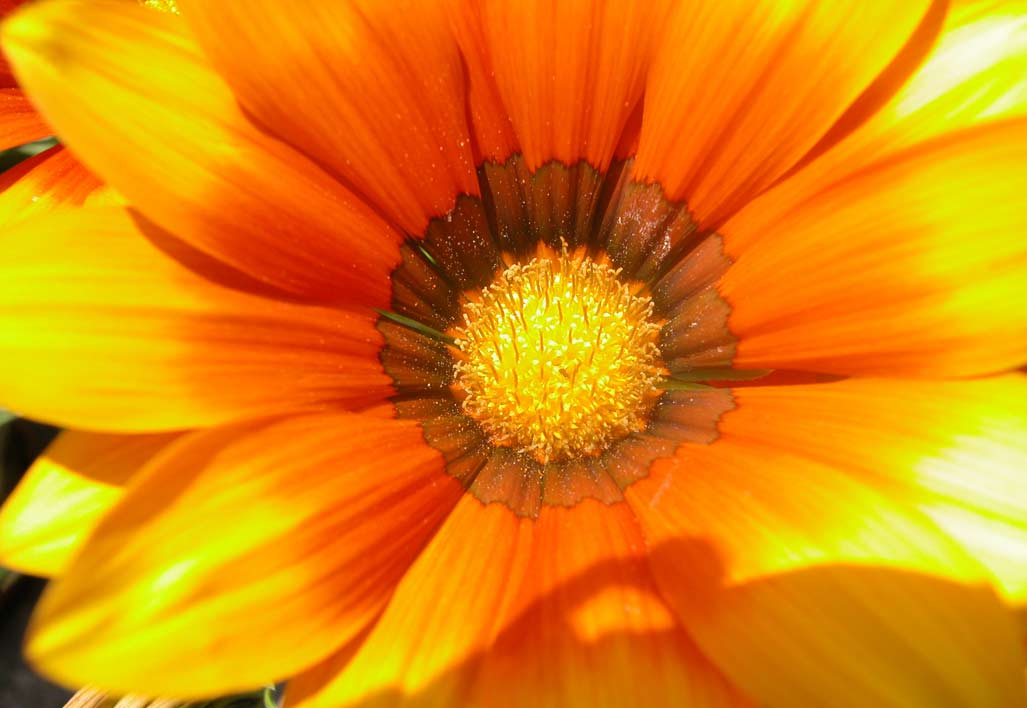 treball personal,macro de flor
