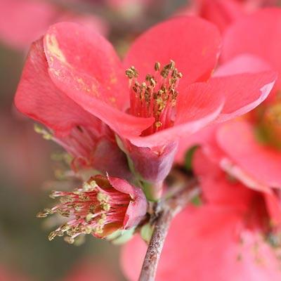 fotografia de una flor detall macro